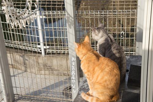 我が家の猫テラスの全貌_d0355333_17272741.jpg
