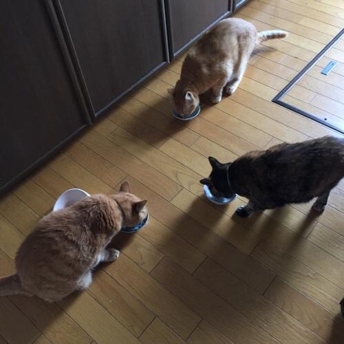 猫用サマーギフト_d0355333_17285138.jpg
