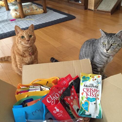 猫用サマーギフト_d0355333_17285187.jpg