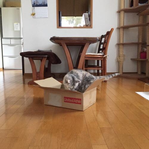 猫用サマーギフト_d0355333_17285234.jpg