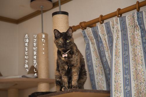 さび猫をだますのは難しい_d0355333_17291018.jpg