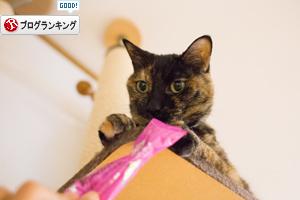 さび猫より上手に_d0355333_17291116.jpg