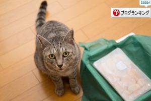 猫パト再開_d0355333_17291611.jpg