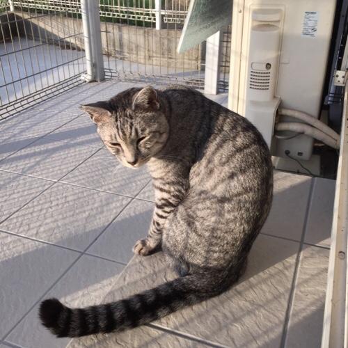 猫パト再開_d0355333_17292718.jpg