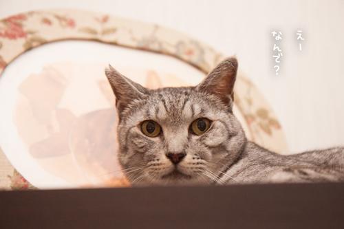 だって、猫だから_d0355333_17294281.jpg