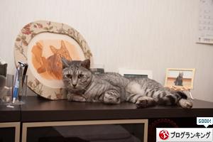 だって、猫だから_d0355333_17294313.jpg