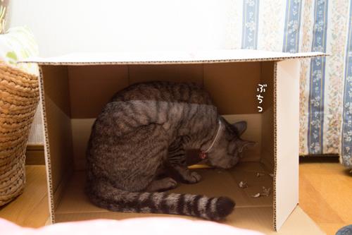 新しい箱_d0355333_17295518.jpg