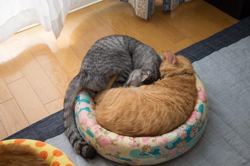 猫の休日_d0355333_17295778.jpg