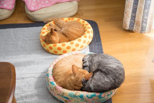 猫の休日_d0355333_17295779.jpg