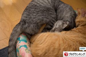 猫の休日_d0355333_17295787.jpg