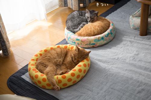 猫の休日_d0355333_17295797.jpg