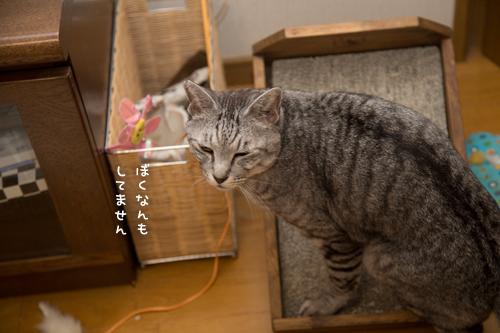 猫もごまかす_d0355333_17301116.jpg