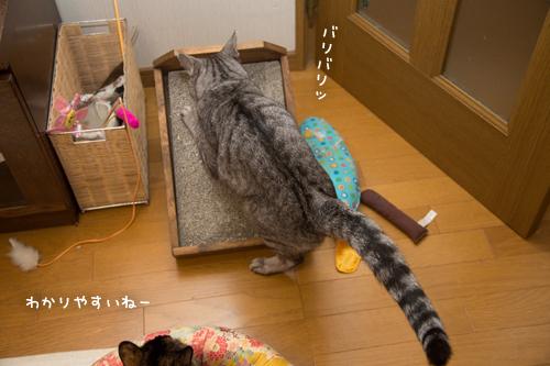猫もごまかす_d0355333_17301125.jpg