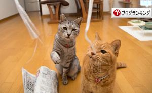 桜の木の子猫たち、我が家へ。_d0355333_17301778.jpg
