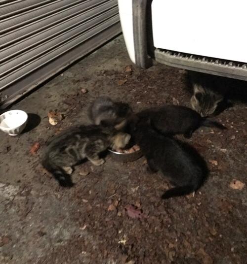 桜の木の子猫たち_d0355333_17303610.jpg