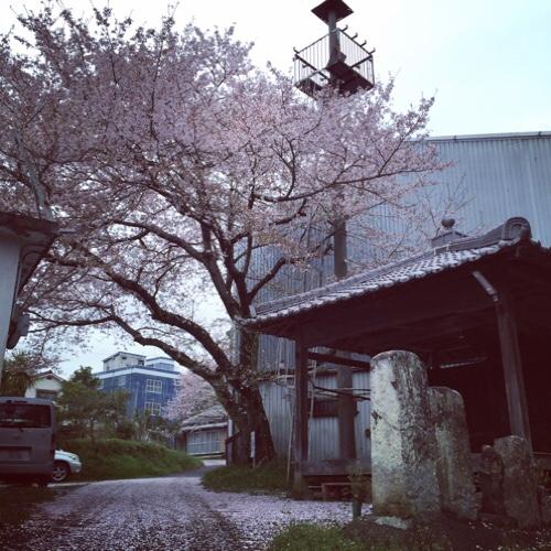 桜の木の子猫たち_d0355333_17303690.jpg