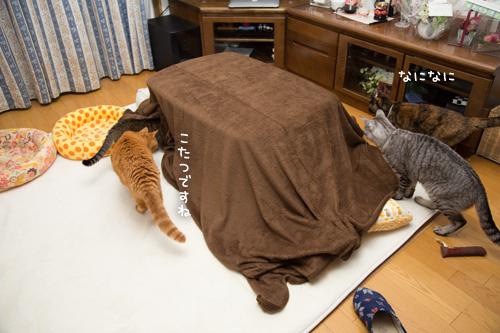 猫を吸い込むこたつ_d0355333_17304608.jpg