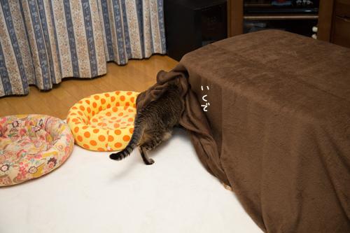 猫を吸い込むこたつ_d0355333_17304623.jpg