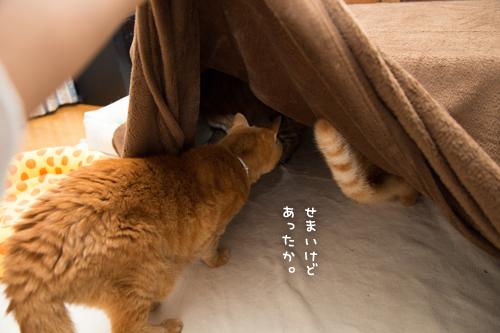 猫を吸い込むこたつ_d0355333_17304644.jpg