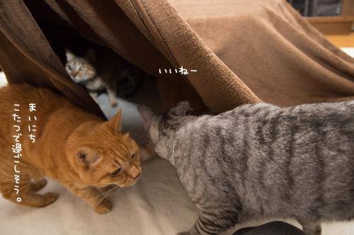猫を吸い込むこたつ_d0355333_17304696.jpg