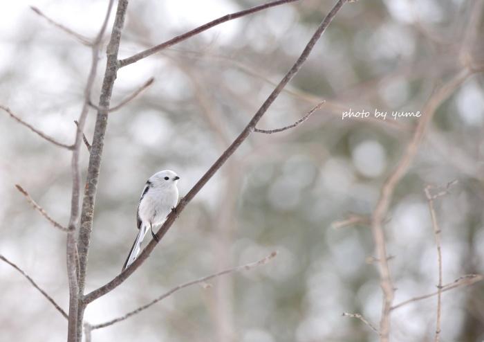 雪の妖精♪_a0322950_09090259.jpg