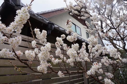 春!_a0201257_20395261.jpg