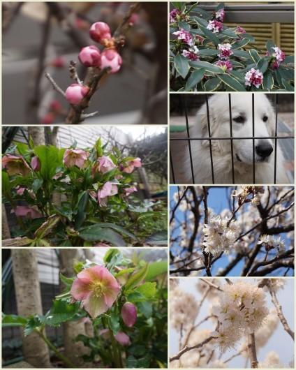 春!_a0201257_20402294.jpg