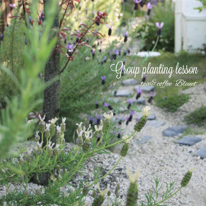 春の寄せ植えレッスンのお知らせ_e0286978_15520750.jpg