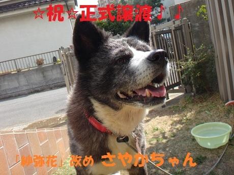 f0121712_08155093.jpg
