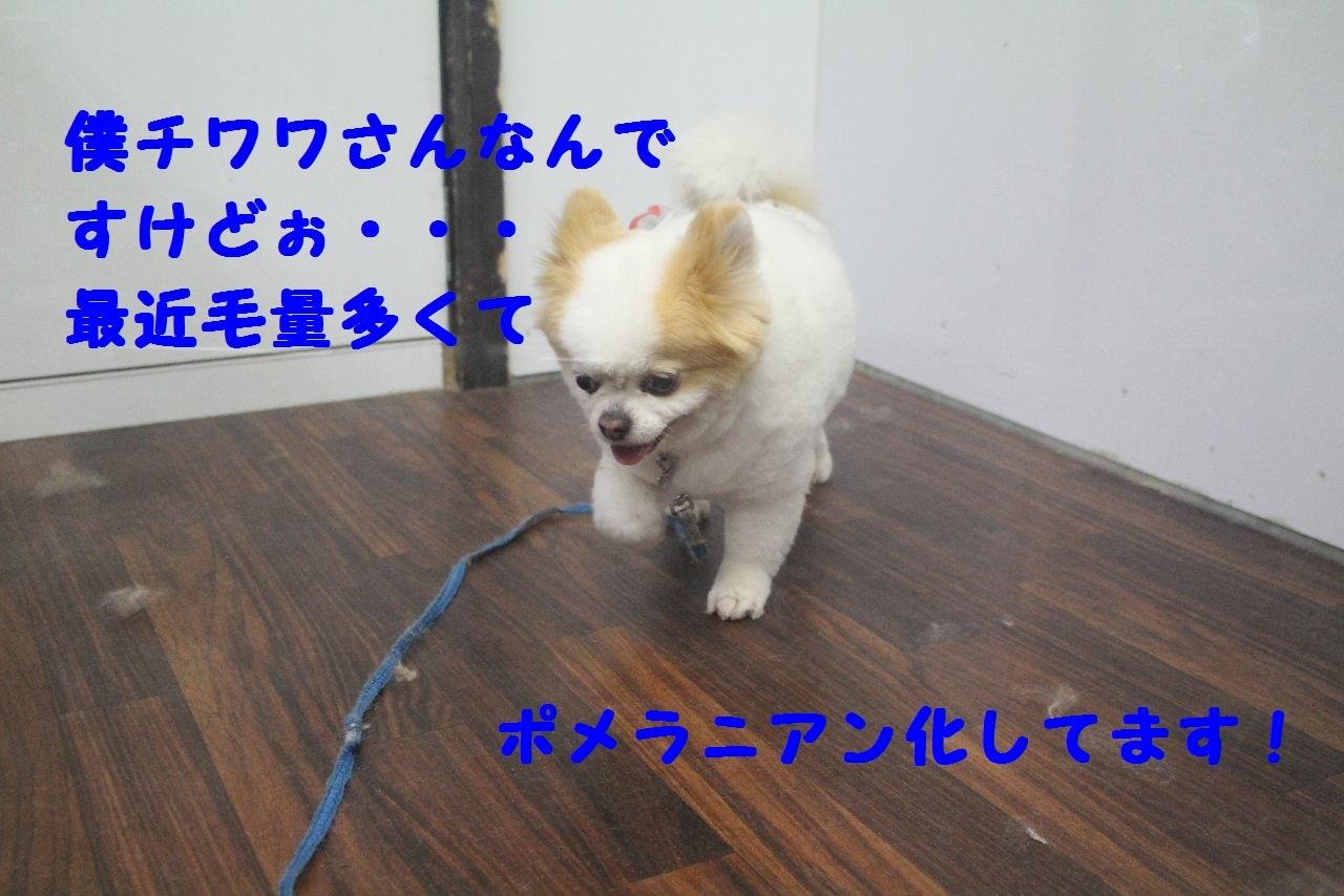 b0130018_08195033.jpg