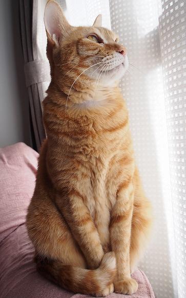 保護猫預かりボランティア始めました(むさしの地域猫の会)_b0141240_21165667.jpg
