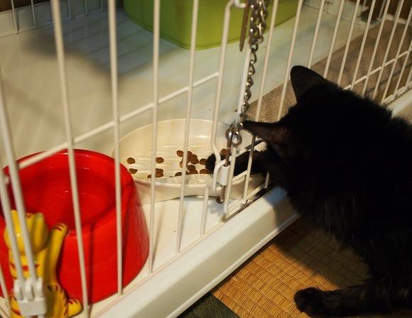 保護猫預かりボランティア始めました(むさしの地域猫の会)_b0141240_21172611.jpg