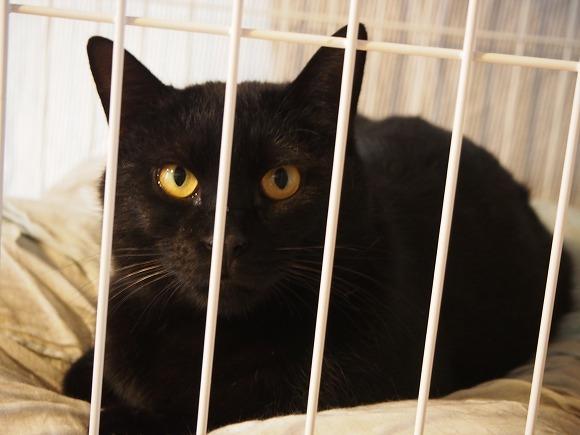 保護猫預かりボランティア始めました(むさしの地域猫の会)_b0141240_21175372.jpg