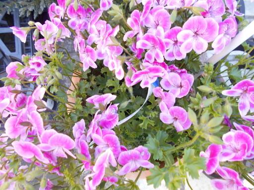 春を待つ花々_a0207196_12494760.jpg