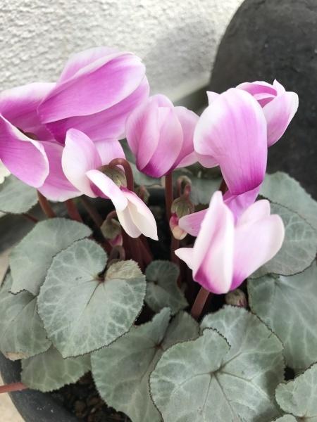 春の芽吹きと咲き始めた花たち_e0232798_09552411.jpg