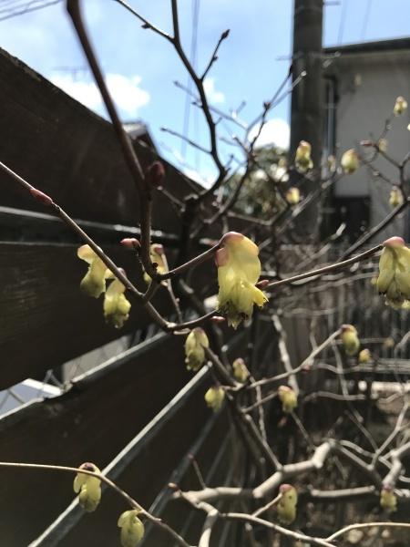 春の芽吹きと咲き始めた花たち_e0232798_11474426.jpg