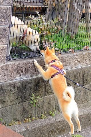 ご近所散歩。 - 結局ただの犬バカです。