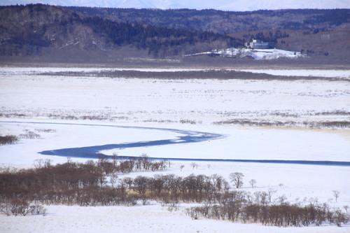 ツルちゃん湿原に帰る 3月16日_f0113639_18315043.jpg