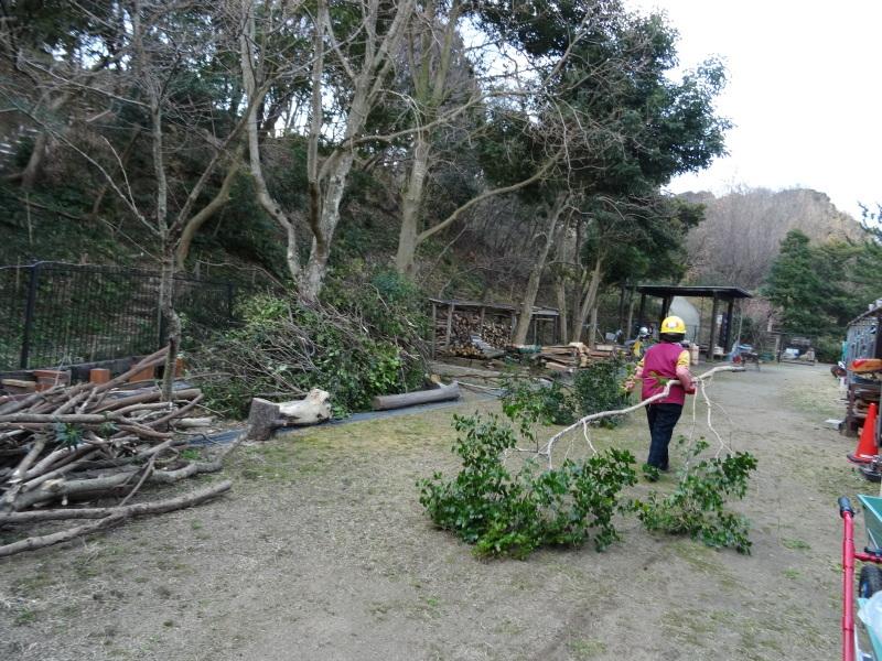 伐採は しんどいが 楽しい・・・うみべの森_c0108460_20133601.jpg
