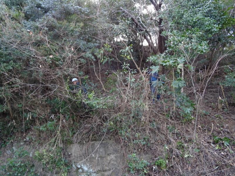 伐採は しんどいが 楽しい・・・うみべの森_c0108460_20164391.jpg