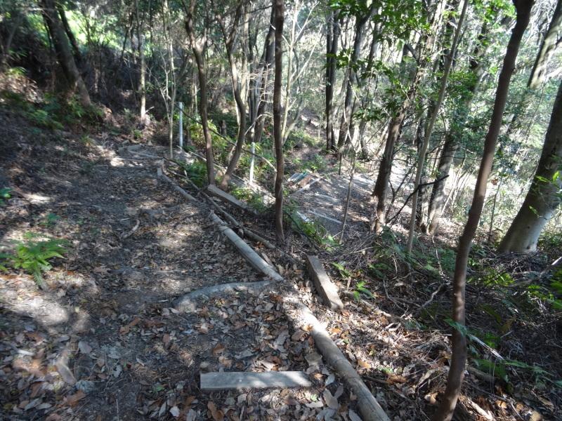 伐採は しんどいが 楽しい・・・うみべの森_c0108460_20221504.jpg