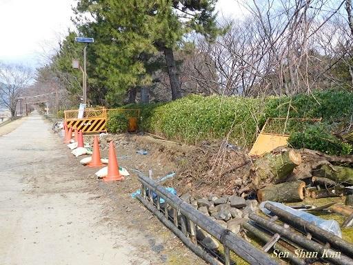 半木の道 枝垂桜の土壌改良_a0164068_23045967.jpg