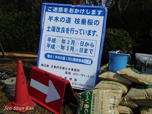 半木の道 枝垂桜の土壌改良_a0164068_23050039.jpg
