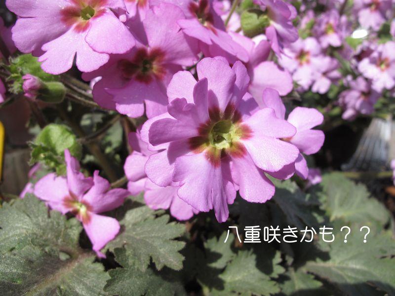 f0059498_2274614.jpg