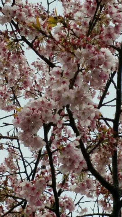 春の連休。3月18日19日20日ですね_d0092901_23430622.jpg