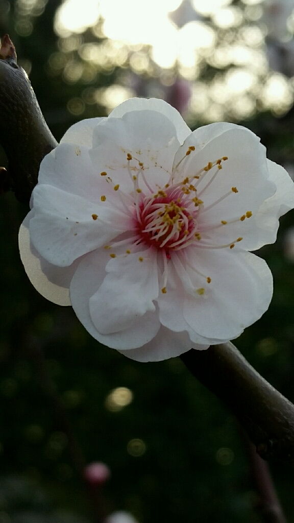 春の連休。3月18日19日20日ですね_d0092901_23431070.jpg