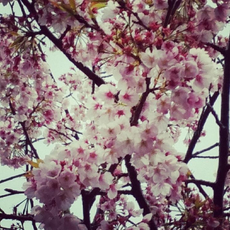 春の連休。3月18日19日20日ですね_d0092901_23431451.jpg