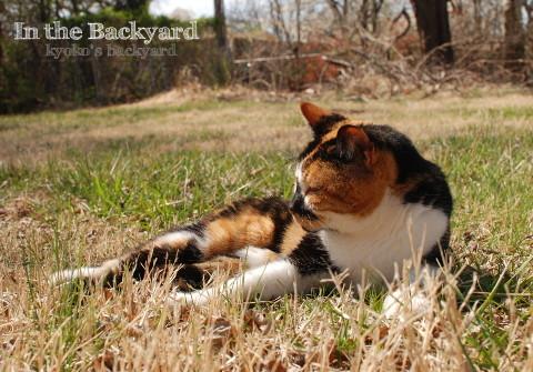 春の裏庭で / プラチナブロガーに選んでもらいました♪_b0253205_05193831.jpg