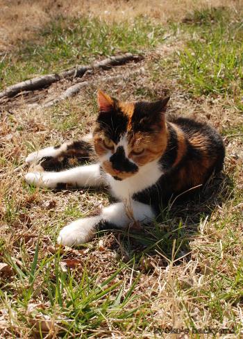 春の裏庭で / プラチナブロガーに選んでもらいました♪_b0253205_05200862.jpg