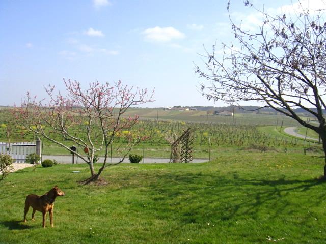 春と刷毛目 Le printemps et le coup de pinceau _e0243221_21350514.jpg